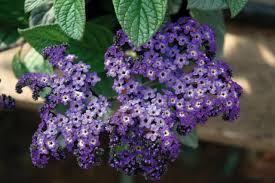 Fragrant Potted Plants Best Smelling Houseplants Diy Network Blog Made Remade Diy