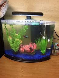articles with fish tanks uk tag fish tanks photo