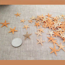 starfish decor ebay