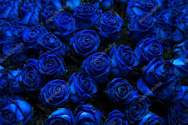 blue roses blue roses stock photo intendo48 53675695