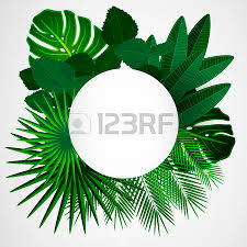 jungle stock photos royalty free jungle images pictures