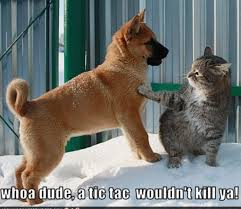 Lolcat Meme - cat and dog lolcat meme global animal