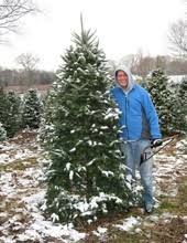 find christmas trees in newberg pnw christmas tree farms u0026 lots