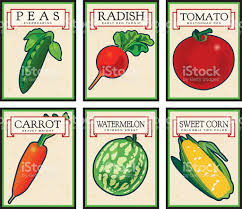 seed packets vintage seed packets stock vector more images of agriculture