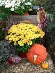 berkshire botanical garden u0027s harvest festival 2014 amy cotler