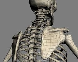 Full Body Muscle Anatomy The 25 Best Skeleton Muscles Ideas On Pinterest Anatomy Drawing