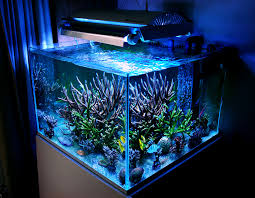 Aquarium Decor Ideas Archives Modern Aquarium Design For Reef Aquaria And Freshwater