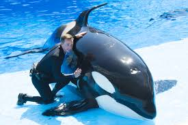 seaworld u0027s latest tour lets you get up close with killer whales
