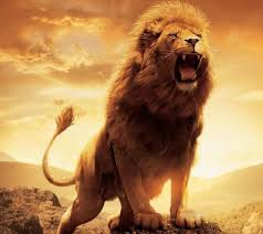 male lion wallpapers photo collection lion wallpaper 44 wallpapers