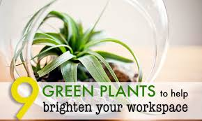 Plants For Office Plants For Office Desk Crafts Home