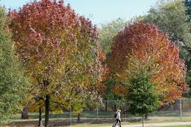 which chicago neighborhood is most covered by trees forest glen