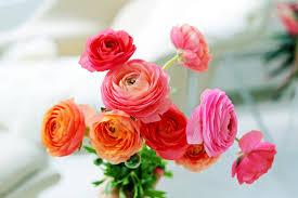 fresh flowers how to take care of fresh flowers popsugar smart living