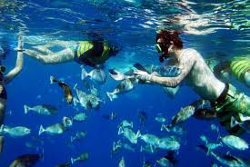 Hawaii Snorkeling images Snorkeling in hawaii mates guide jpg