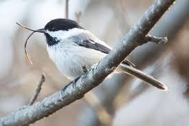 what u0027s got bird beaks in a twist audubon