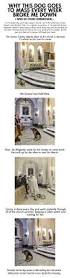 heartwarming thanksgiving stories best 20 sad dog stories ideas on pinterest u2014no signup required