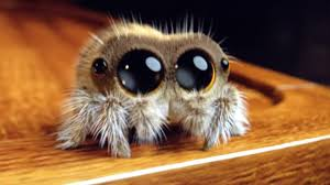 Cute Spider Meme - hi my name is lucas the cute spider video on the computer youtube