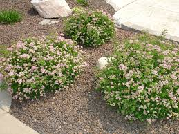 Colored Rocks For Garden by Landscape Rock Yard Calculator Ebony Blend Indianapolis