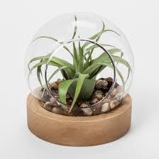 glass terrarium with wood base threshold target