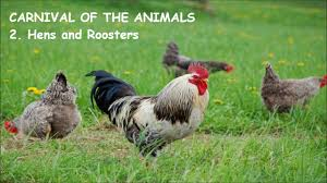 carnival of the animals 2 hens and roosters poules et coqs by