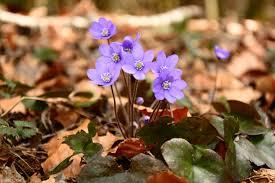 free images nature blossom ground leaf flower petal bloom