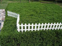 Fencing Ideas For Small Gardens Garden Fence Ideas Pinterest In Staggering Small Also Cedar Wood
