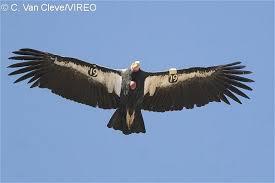 Bird Wing - bird flight