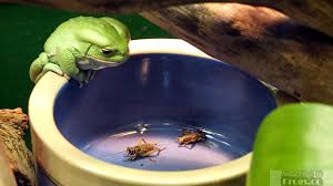 the best pet frogs for children or a first time owner