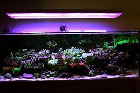 Tank Aquascape Show Off Your Large Tank Aquascape Reef2reef Saltwater And