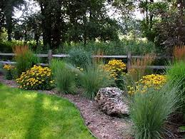 714 best ornamental grasses and landscape grasses images on