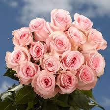 global roses premium wholesale pink roses global