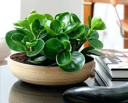 best indoor house plants best indoor plant amazing indoor house plants best ideas about house