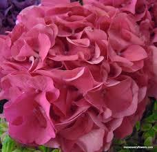 Hydrangea Wedding Hydrangea Wedding Flowers Louise Avery Flowers
