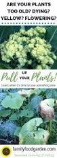 Fall Garden Plants Texas - 195 best common sense gardening images on pinterest organic