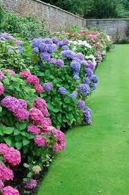 best 25 hydrangea garden ideas on pinterest prune ideas