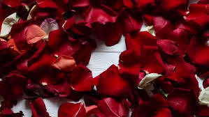 romantic flying light red rose flower petals backdrop for st