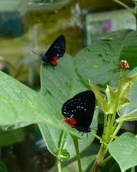 native plants that attract butterflies attracting butterflies to your miami garden the 16 best