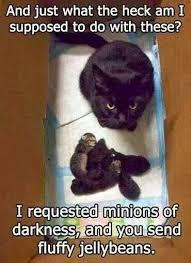 Evil Cat Meme - unimpressed evil cat rofl zone