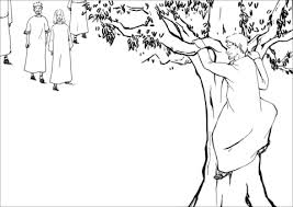 Zacchaeus A Chief Tax Collector Climbed A Sycamore Fig Tree To See Zacchaeus Coloring Page