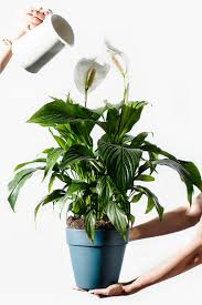 4 essential indoor plants the chriselle factor