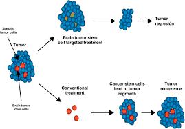 stem cells implications in the development of brain tumors