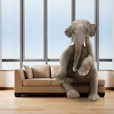 elephant living room elephant in the living room www elderbranch com