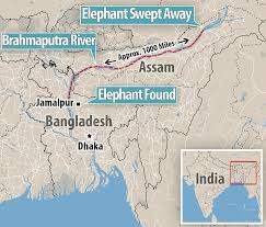 Brahmaputra River On Map Elephant That Travelled From India To Bangladesh In Floods Dies 2