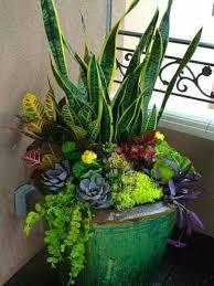 Rectangular Succulent Planter by Best 25 Succulent Containers Ideas On Pinterest Succulent