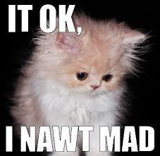 Mad Kitty Meme - funny white meme more information