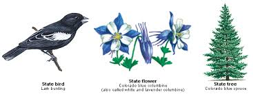 State Flower Of Colorado - oes tours the usa colorado