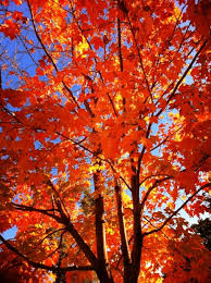 fall tree care tips for healthy trees year