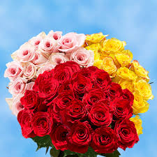 global roses all flowers at wholesale pricing global