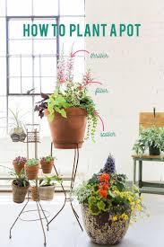 Easy House Plants 457 Best Gardening Houseplants Images On Pinterest Houseplants