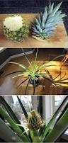 23 Diagrams That Make Gardening by Anyone Can Make These 10 Beautiful And Useful Diy Accessories For