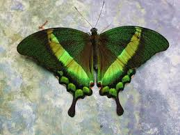 Blue And Green Butterfly - 22 best embroidery butterfly series images on